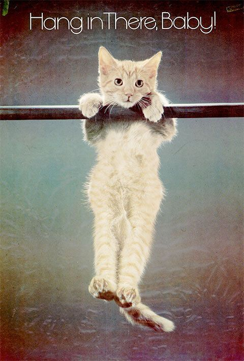 Hang In There Cat Poster Original 70s : there, poster, original, There,, Cats,, Posters,, There