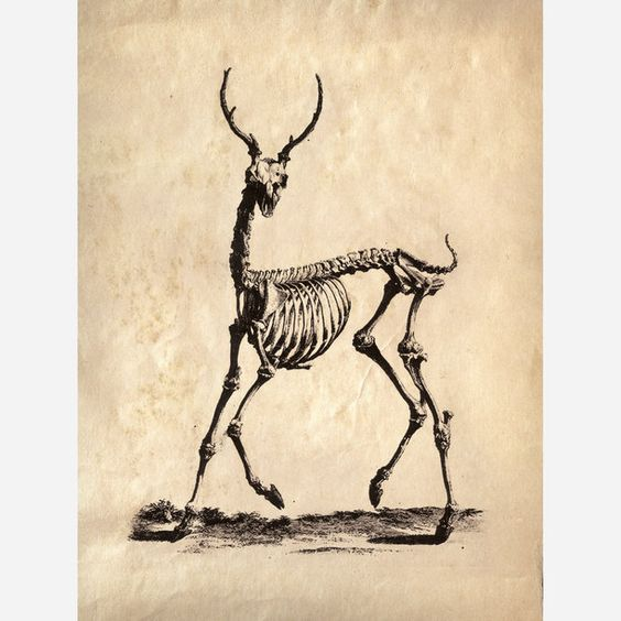 If taxidermy is too strong a commitment, consider the Deer Skeleton Print from Curious Prints. Originally featured in a salvaged science text book, this detailed illustration is transformed into a haunting vision by isolating it from its intended context.