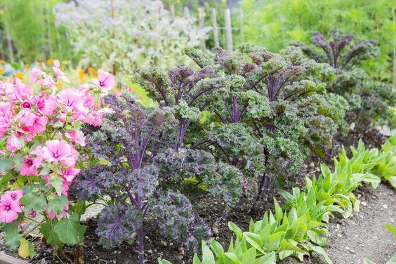 Anbauplan Fur Gemuse Gute Pflanzkombinationen Auch Fur Das Hochbeet Pflanzen Anbau Hochbeet
