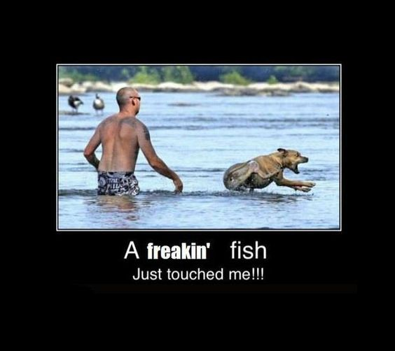 A fish touched me!