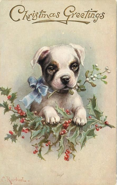 """Set Title: -Favourite Dogs -First Use: December 24, 1909 -Set Comment: -Oilette -Processed in Bavaria for Raphael Tuck & Sons -Sold: Great Britain, France -Paper Cut-outs -Card Comment: Print in Gilt """"Christmas Greetings"""" -Artist: C. REICHERT -Card Title: TERRIER PUPPY HOLDS MISTLETOE IN MOUTH; REST PAWS IN HOLLY:"""