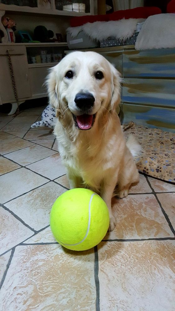9 5 Large Dog Ball For Pet Chew Toy Pet Puppy Inflatable Tennis Ball Thrower Chucker Ball Launcher Play Toy For Dogs Dog Ball Pet Puppy Dog Toys