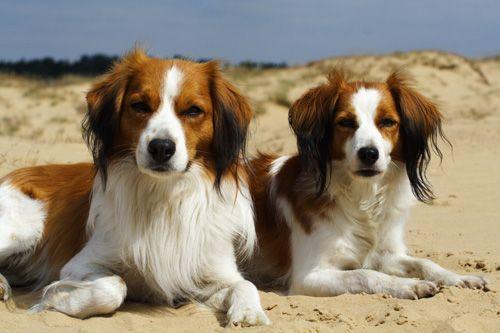 Het Ras Hondenrassen Honden Hondenspullen