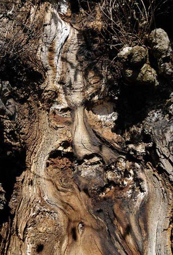 Дървов дух