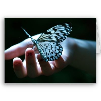 Butterfly on Hand Card. $2.95