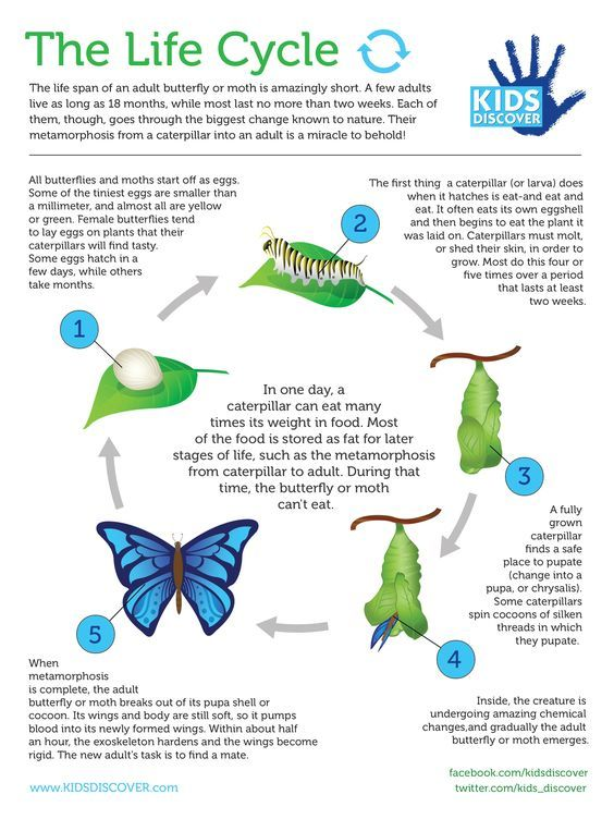 Life Cycles Printable Free The Activity Mom Life Cycles Science Life Cycles Butterfly Life Cycle Lessons