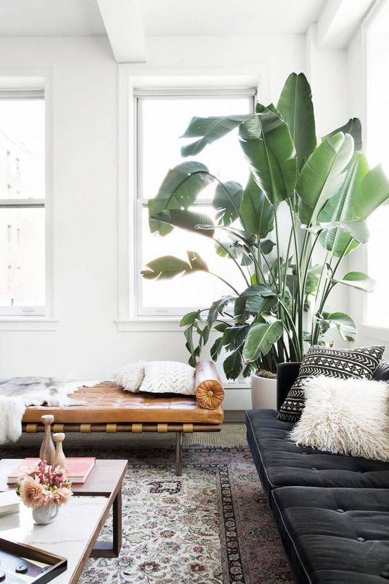 corner plant, chic, neutral color palette:
