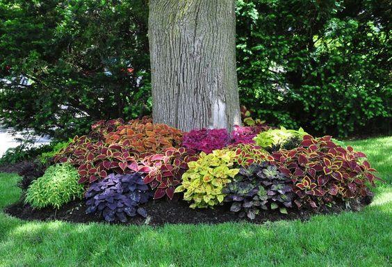 Si tiene algún árbol en su patio trasero o en el patio frontal, es posible pensar en crear un macizo de flores alrededor de ella. Esto instante cambiar tod