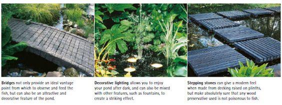 koi pond pond plants