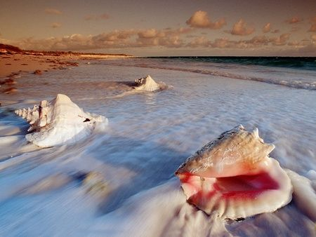 Conch shells take a break from the sea during their tropical beach vacation.