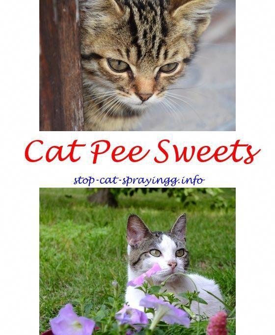 138633c612f3824e6ac972246acb9917 - How To Get Rid Of Cat Dander On Furniture