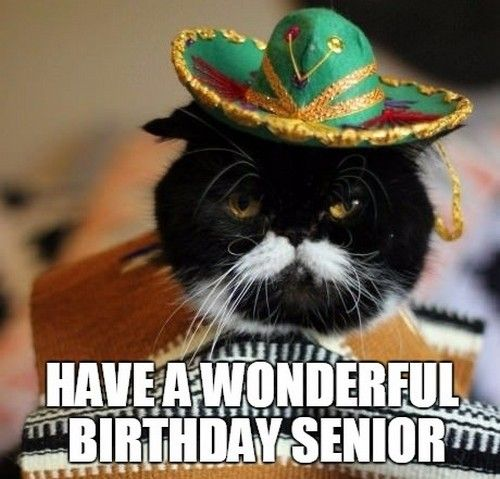 Mexican Birthday Memes Wishesgreeting Cat Birthday Funny Birthday Meme Dog Mexican Birthday Meme