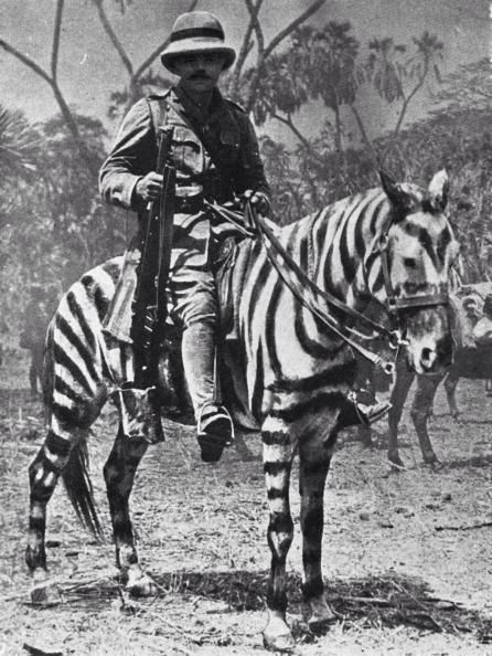 WWI animals: