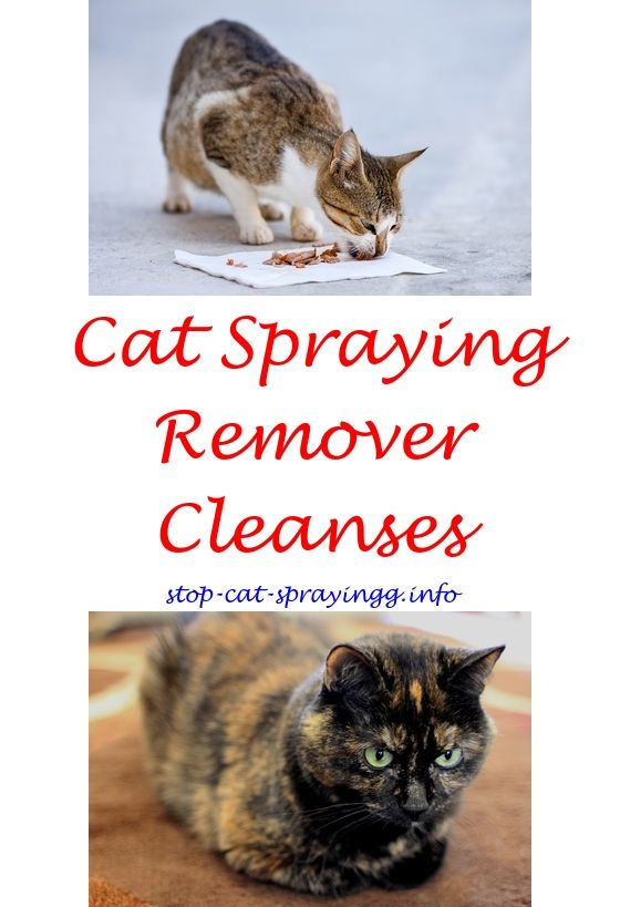 Aluminum Boat Plans And Kits Male Cat Spraying Best Flea Spray Flea Spray For Cats