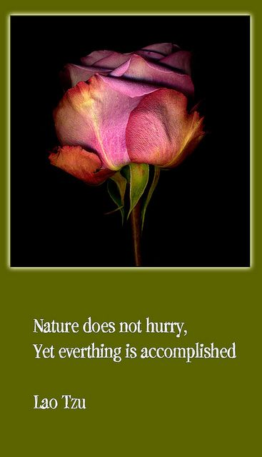 Lao Tzu.  My busy busy mind needs to remember this.