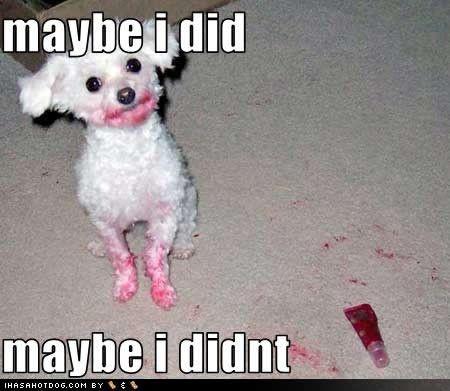 hilarious! poor dog lol