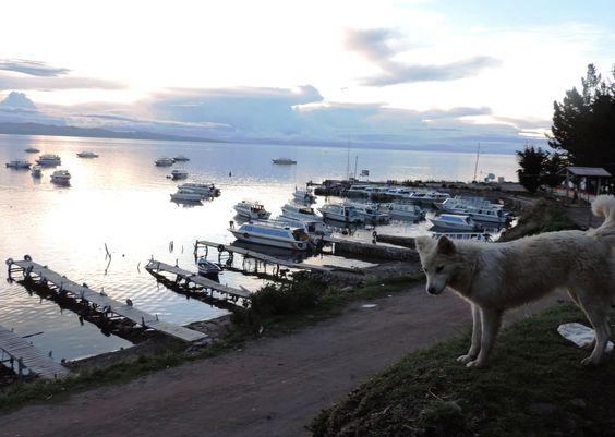 Muelle en Copacabana, Bolivia.  Siempre hay un perro para acompañarte. PH: Josefina Lorenzo