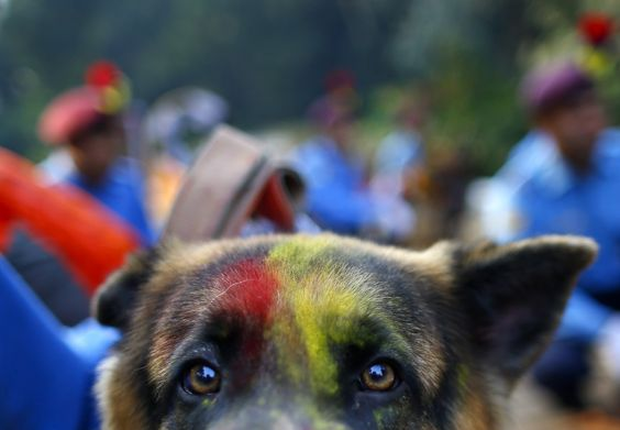 Each year, during the Kukur Tihar festival, hindus in Nepal celebrate man's best friend.