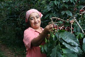 Café Mam | 100% Organic, Fair Trade Arabica Coffee, Shade-grown by Mayan Farmers in Chiapas, Mexico.