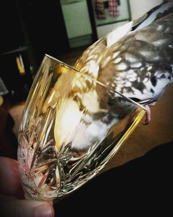 Finito! #bird #instabird #cockatiel #tielsofinstagram #tiel #birdsofinstagram #feather #petlove #petlover #pet #mypet #petsofinstagram #nymphensittich #nymphicushollandicus #calopsitte #calopsita #orangecheeks #cockatielsofinstagram #parrotsofinstagram #parrot #glass #glasswear #crystal #crystalglasswear #wine #italianwine #prosecco #proseccotime #italianprosecco by jennzedo http://www.australiaunwrapped.com/