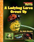 A Ladybug Larva Grows Up