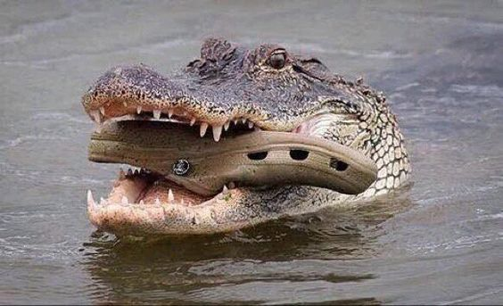 """Incredible Pics on Twitter: """"Here we see a mother croc carrying her baby across the water. I love nature https://t.co/bKzONfp4pe"""""""