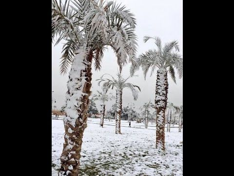 [WATCH] Deep freeze across UK, Europe, and Russia – Japan Obliterates Snow Records – Snow in Kuwait & Saudi Arabia – The United States of Paranoia