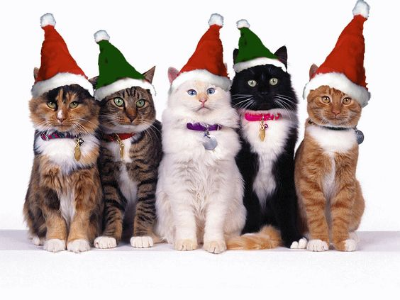 Image result for Christmas animals gifs quotes