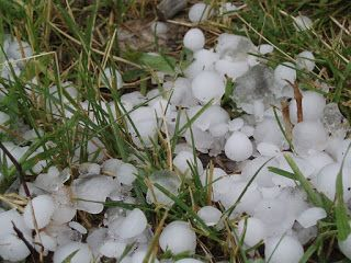 Gardening Gradually: How do I protect garden plants from Denver hail st...