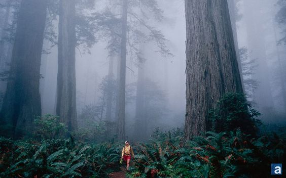wallpaper_sequoias_660
