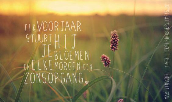 Elk voorjaar stuurt Hij je bloemen en elke morgen een zonsopgang! -Max Lucado-  #Zon  http://www.dagelijksebroodkruimels.nl/bloemen-en-een-zonsopgang/: