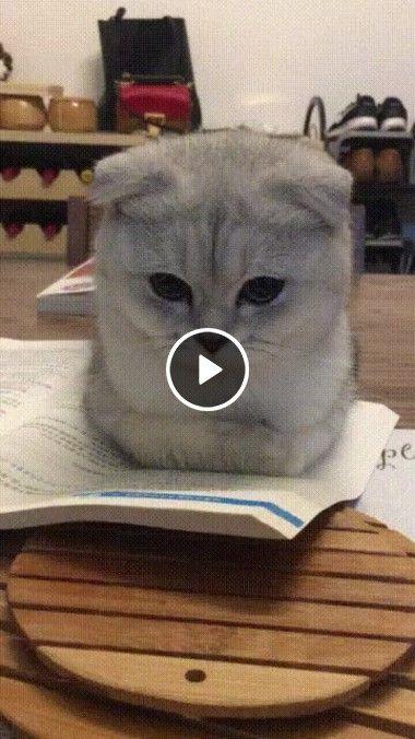 Oie! Quero ler com você!