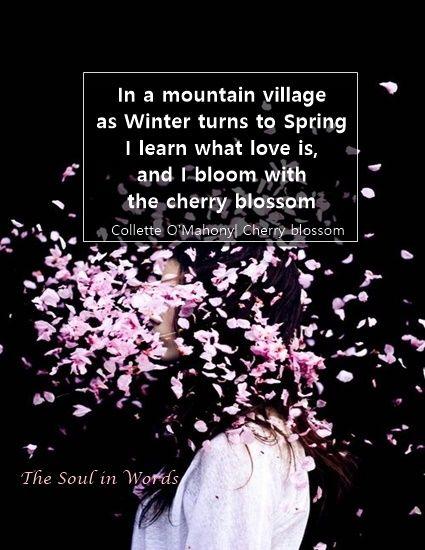Hummingbird And Cherryblossom Cherry Blossom Quotes Blossom Quotes Flower Poem