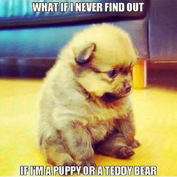 Cute Fluffy Puppy Meme Jpg 564 215 564 Man S Best Friend