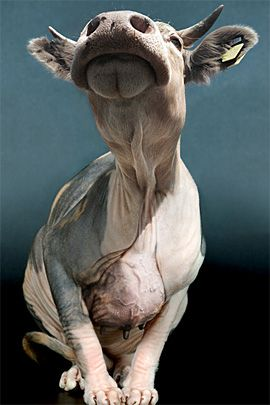 Superbes photos Manipulations de Jan Oliehoek | Le design Inspiration
