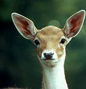 SDW Dormagen e.V. | Wildpark - Hier geht's tierisch zu.
