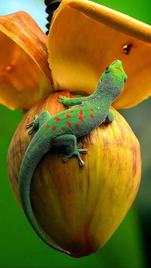 Helpful Toddler Iguana Pet Nature Exceptional Rainforest Animals Iguana Pet Reptiles And Amphibians