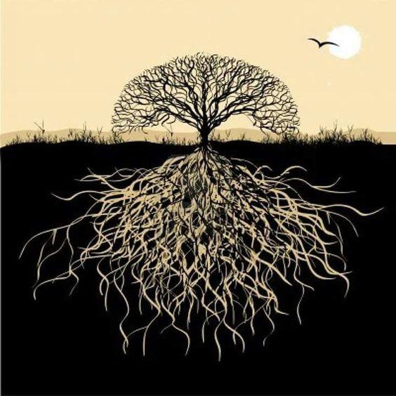 Voor groei heb je wortels nodig