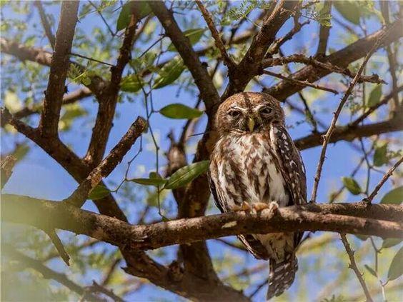 """Image de """"The owl pages, facebook"""""""