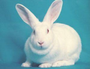 ウサギ - Поиск в Google
