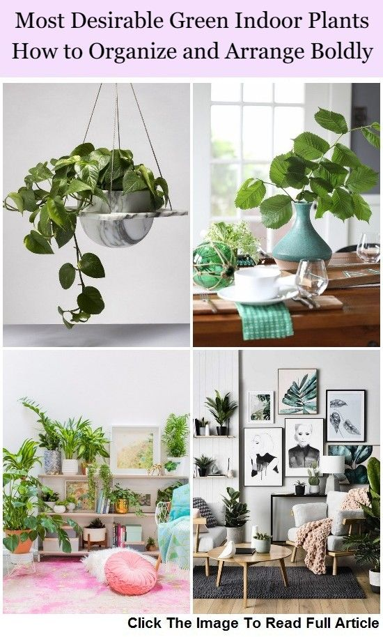 Most Desirable Green Indoor Plants How To Organize And Arrange Boldly The Home Decor Indoor Plants Indoor Green Plants Plants