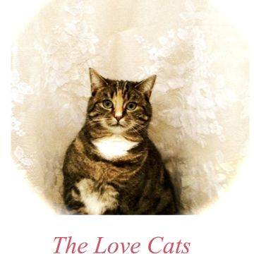 Cartaz#1 The Love Cats, 2015
