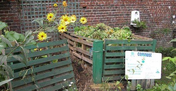 In den Garten statt in die Mülltonne – 6 Abfallprodukte als Dünger