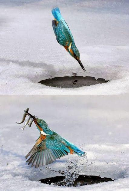 Ice Fishing.. It's amazing Google+