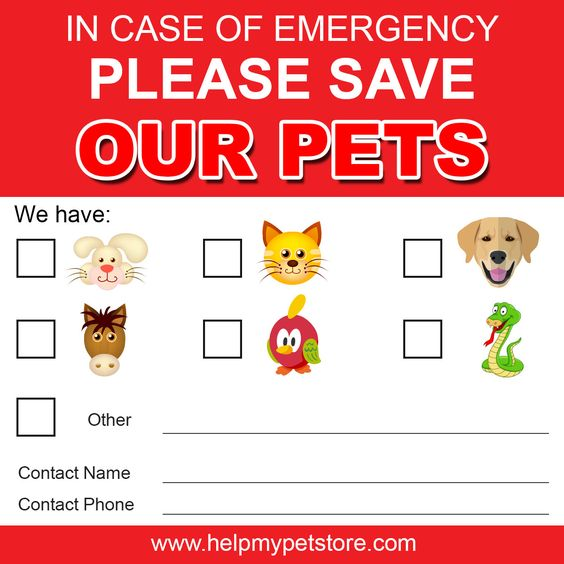 Emergency Save My Pet Window or Wall Sticker Instant Digital Download