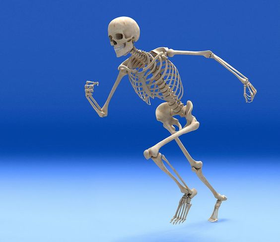 Running dog skeleton
