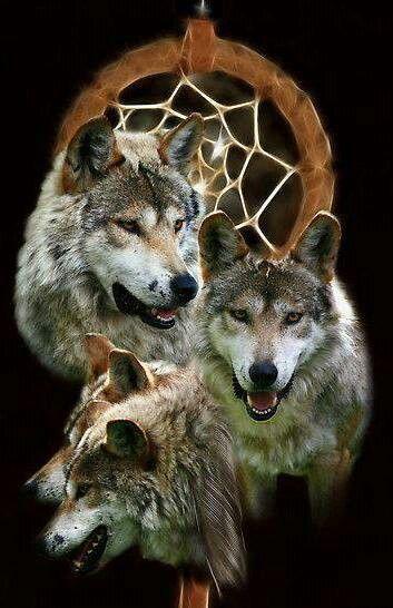 lobos e filtro dos sonhos
