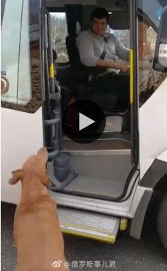 Esse é o cachorro mais esperto e cavalheiro que já vi