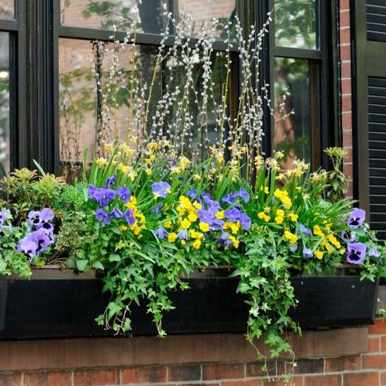 Perennial window box ideas