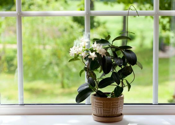This exotic plant has a gentle, soothing effect on the body and mind. It has been shown in one study to reduce anxiety levels, leading to a greater quality of sleep.